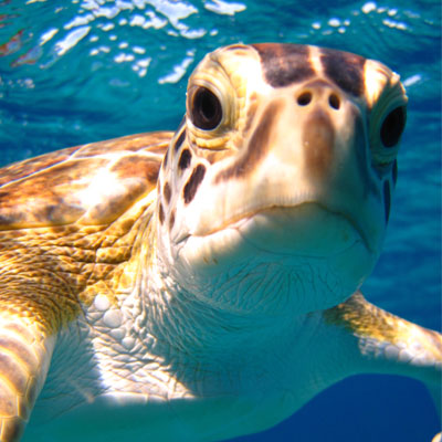 brooks-swimming-with-turtles-in-the-bahamas-og_6196