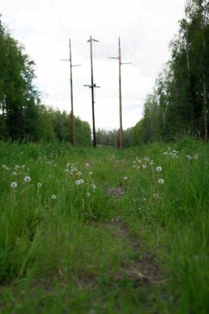 field-0702
