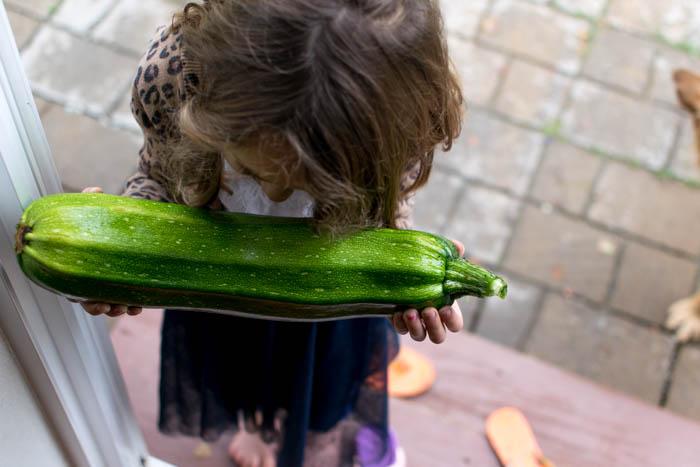 zucchini-0446